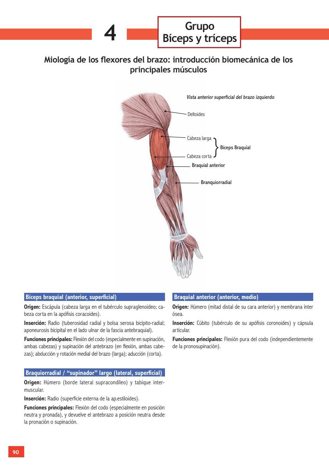 Enciclopedia de ejercicios de estiramientos by efdgq - issuu
