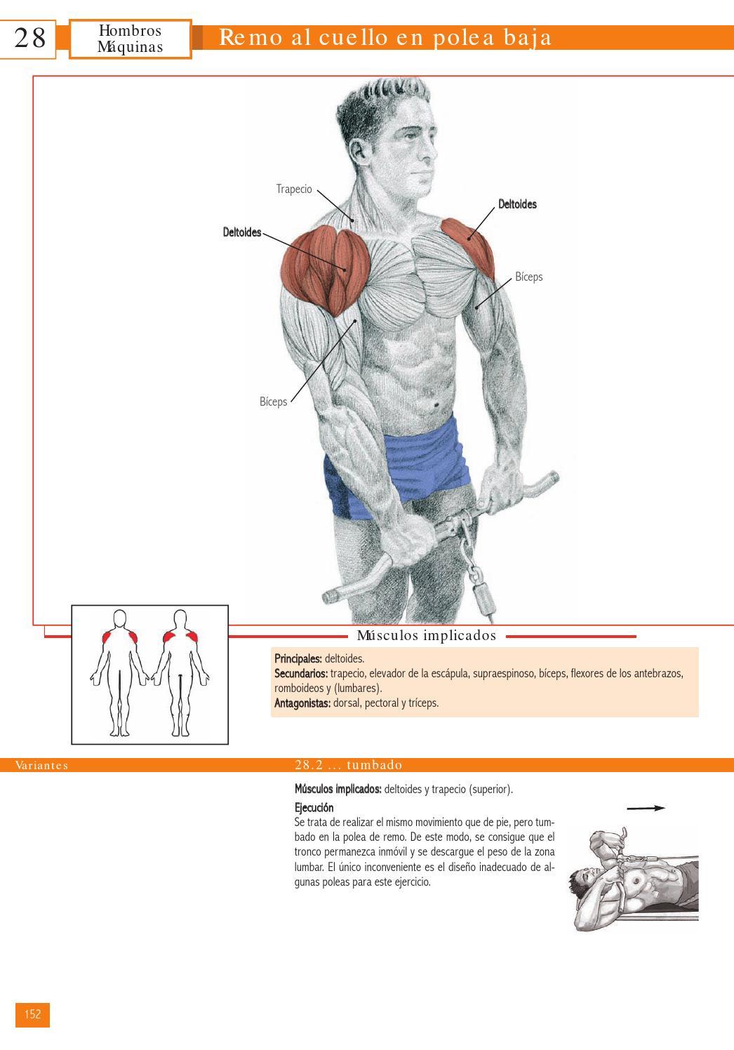remo polea baja musculos implicados