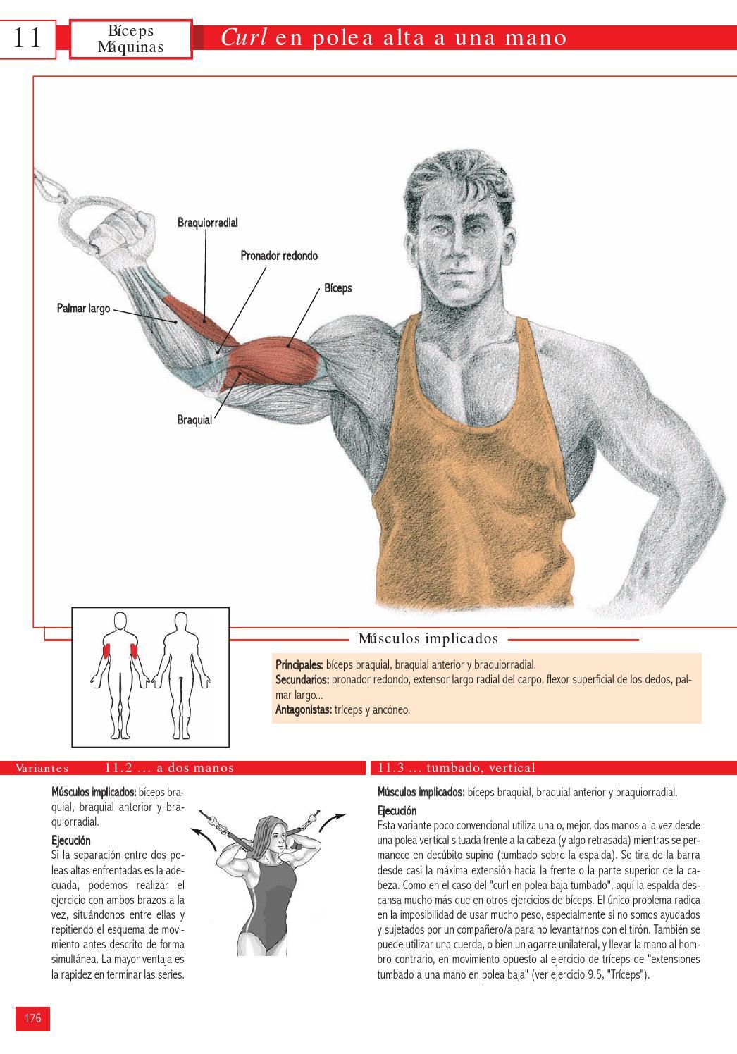 ejercicios para biceps y triceps con poleas