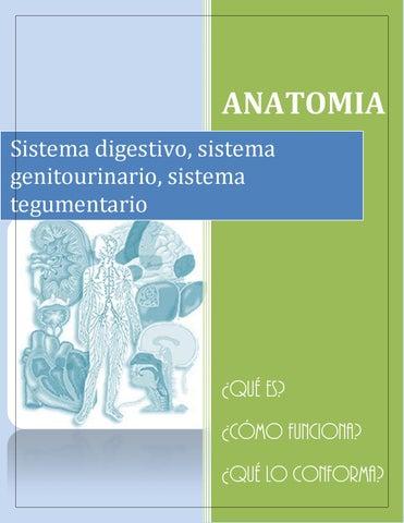 Anatomiaa by Carla Daniela Lopez - issuu