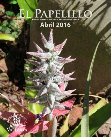 El Papelillo Abril 2016 By Jardin Botanico De Vallarta Vallarta