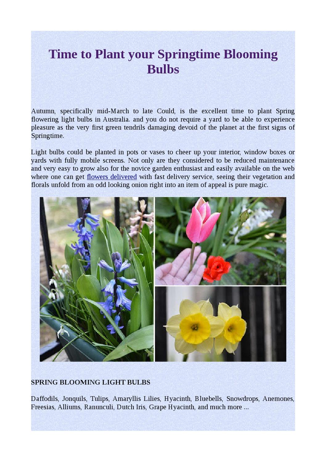 Time To Plant Your Springtime Blooming Bulbs By Moyses Roses Issuu