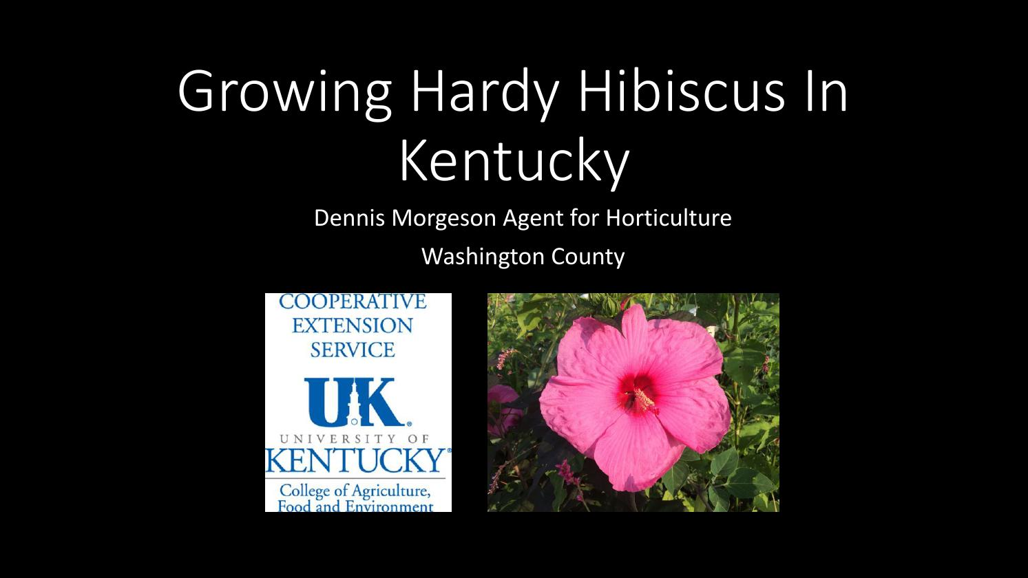 Growing Hardy Hibiscus In Kentucky By Dennis Morgeson Issuu