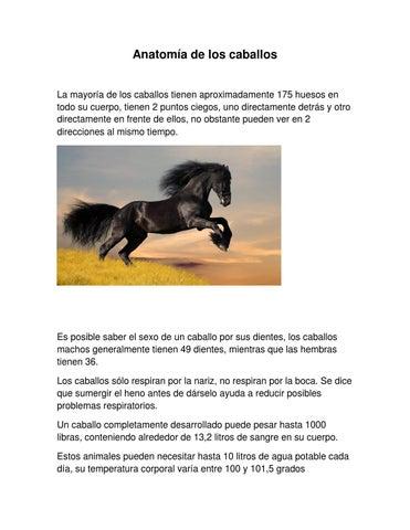 Anatomía de los caballos by carla zepeda - issuu