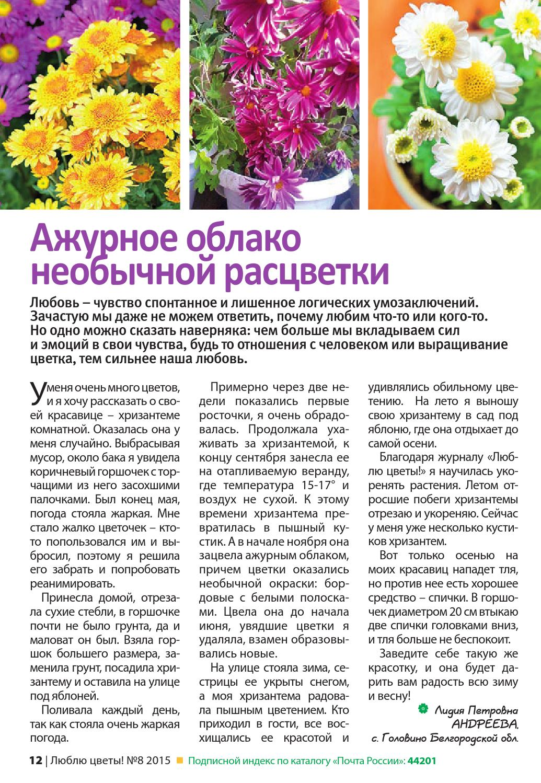 хризантема Page_12
