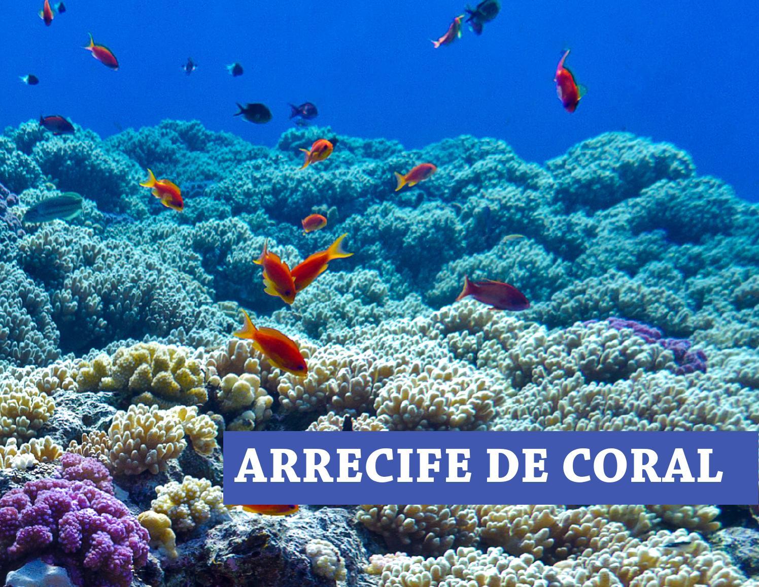 ARRECIFE DE CORAL by Harumy Herrera - issuu
