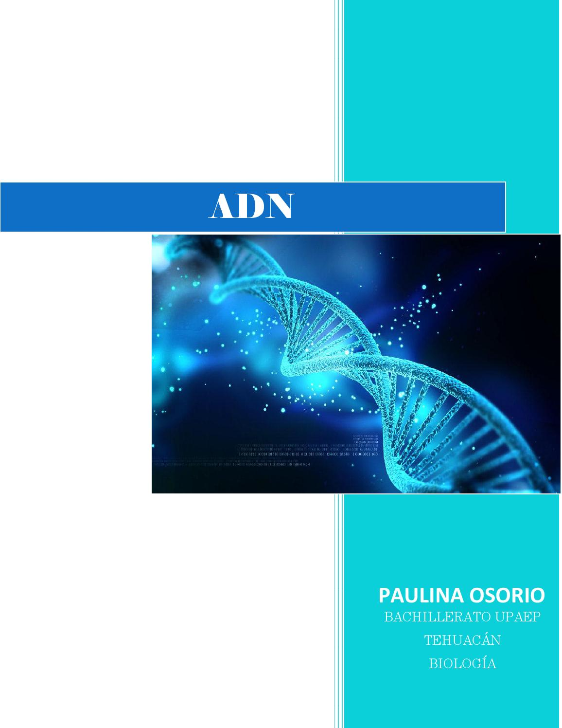 Adn By Paulina Issuu