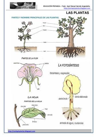 Plantas by José Manuel Garrido Argandoña - issuu