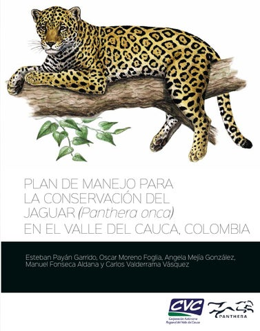 Plan de manejo para la conservación del Jaguar (Panthera onca) en el ...