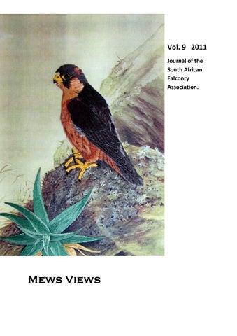 Study falcon mews