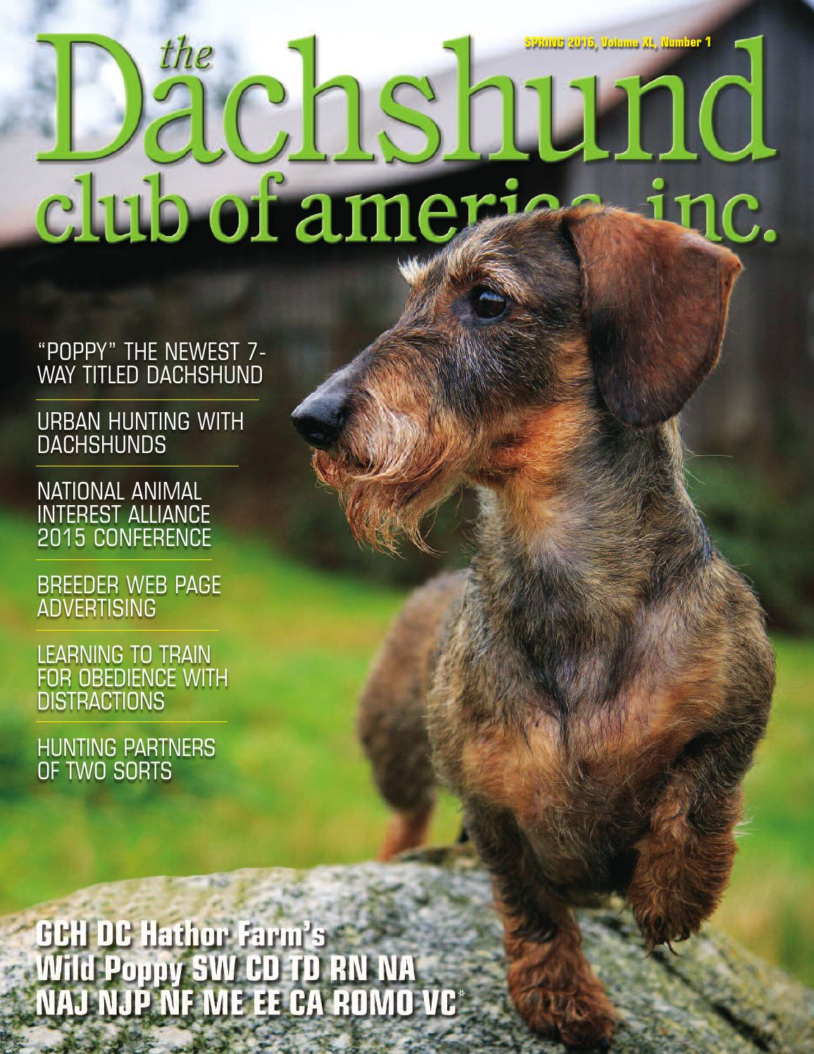 Dachshund Club Of America Spring 2016 By Lynne Dahlen Issuu