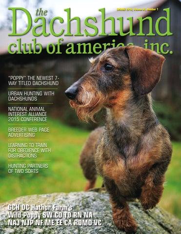 ddbb466a3 Dachshund Club of America Spring 2016 by Lynne Dahlen - issuu