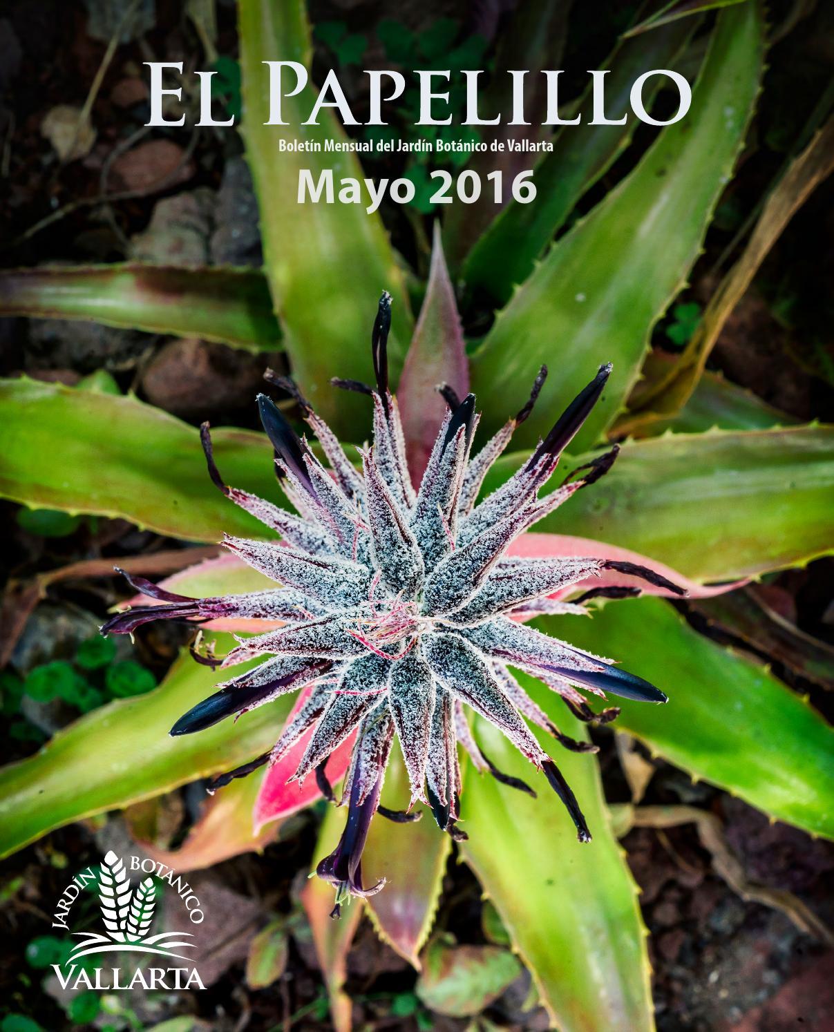 El papelillo mayo 2016 by jard n bot nico de vallarta for Sanse 2016 jardin botanico
