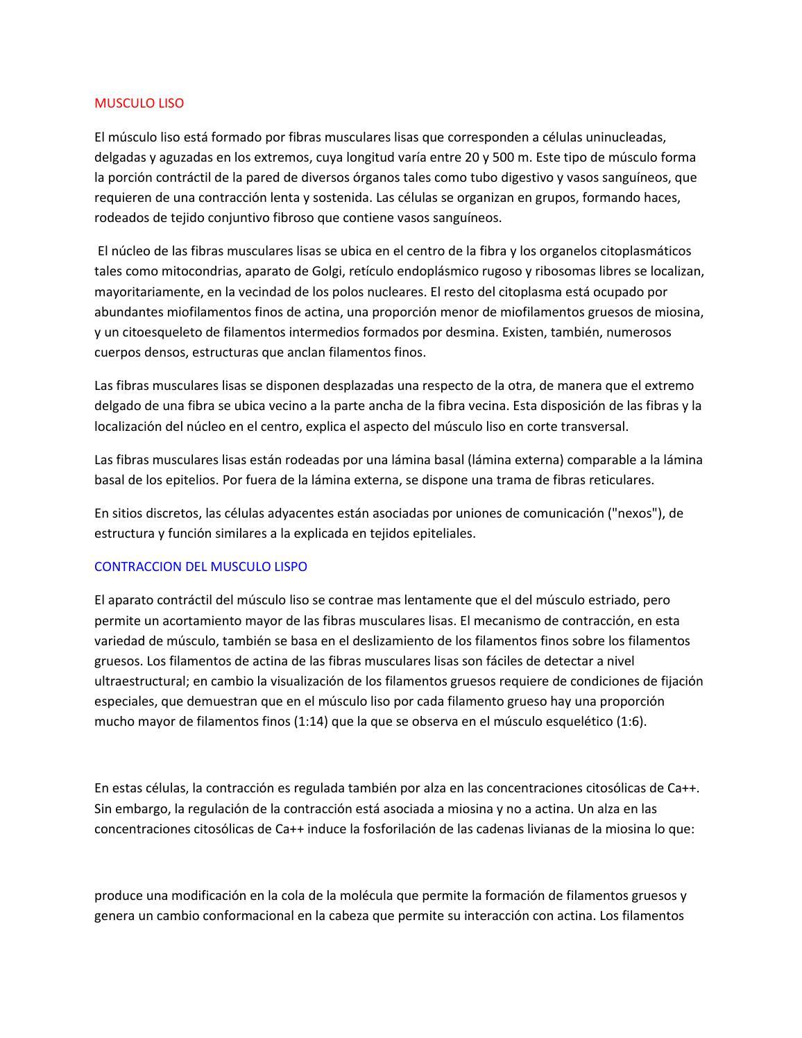 Musculo liso by Kevin Arnulfo España Morales - issuu