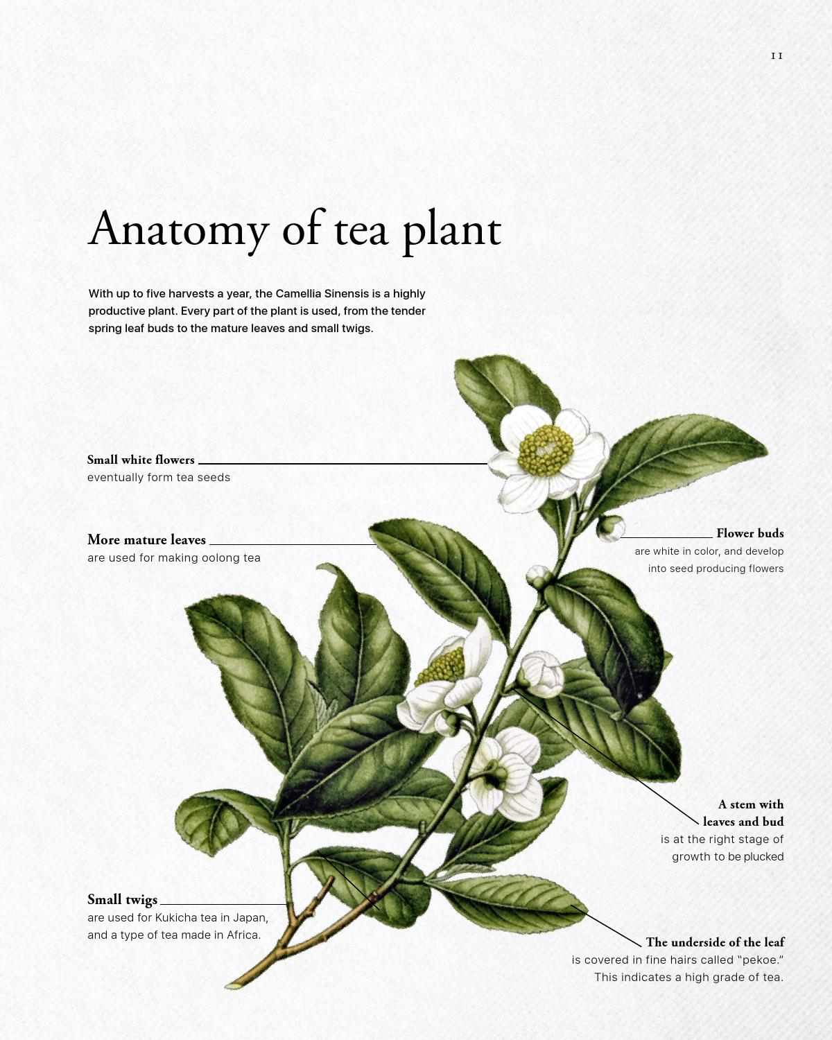 The Art Of Tea Making By Vitali Kharevich Issuu