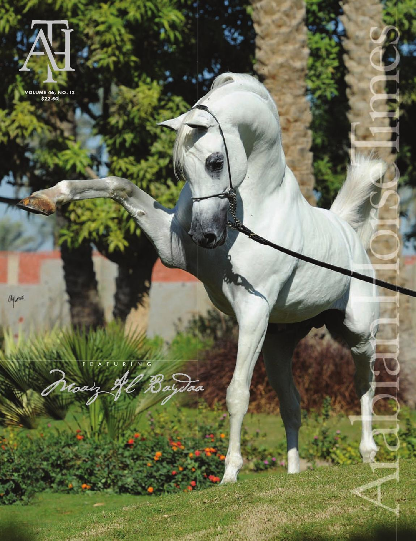 Arabian Horse Times Vol 46 No 12 By Arabian Horse Times Issuu