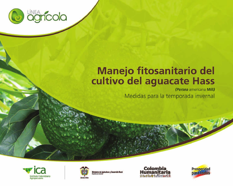 Manejo Fitosanitario Del Cultivo Del Aguacate Hass By