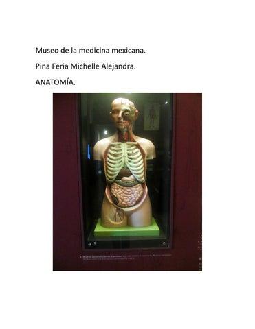 Museo de la medicina mexicana by Miguel Feria - issuu