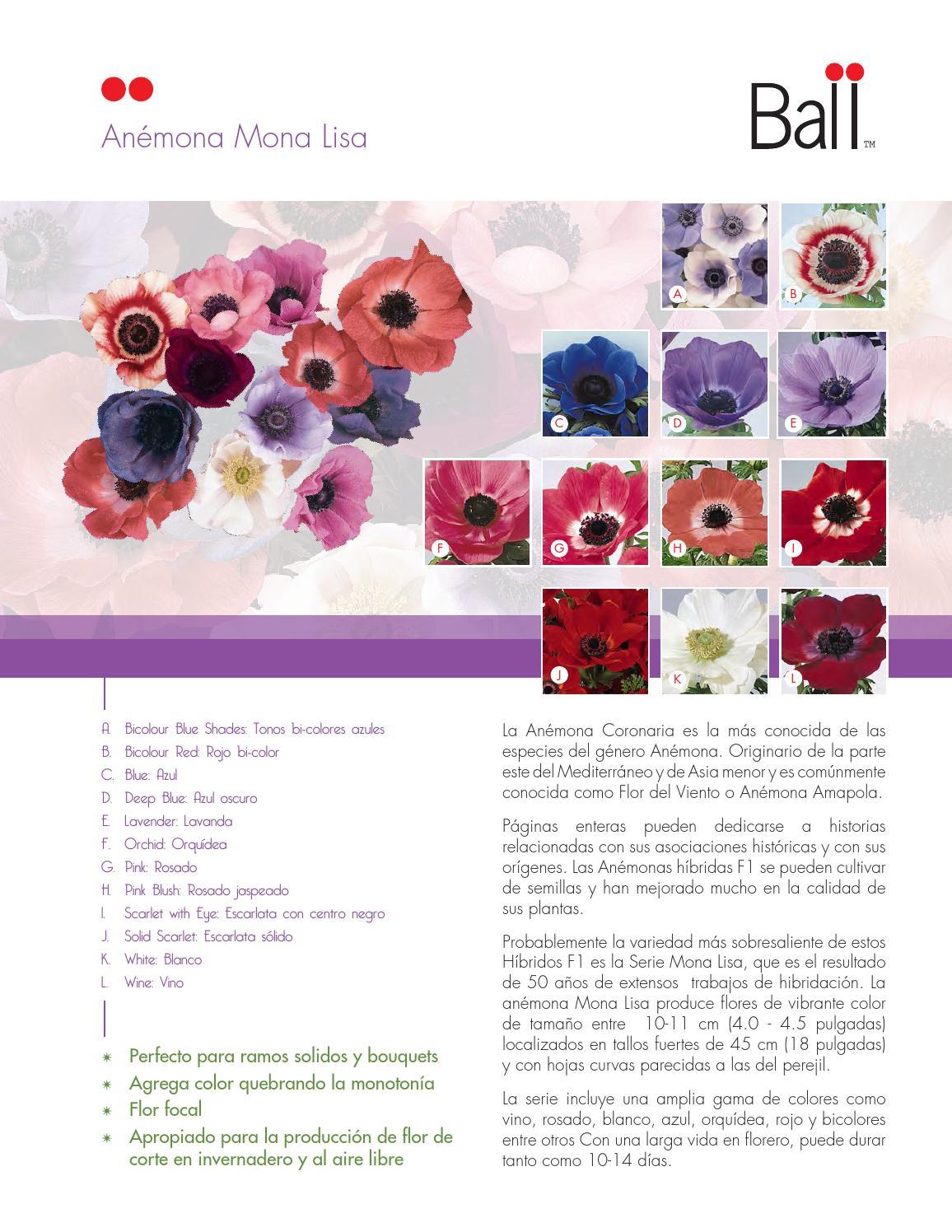 Ballsb flores de corte by BallSB - issuu