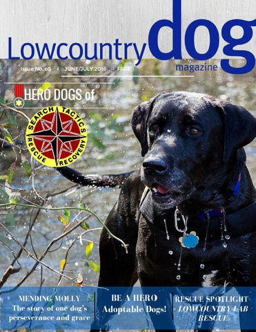 Night In Charleston I Met Katrina Dog >> Lowcountry Dog Magazine June July 2016 By Lowcountry Dog Magazine