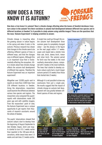 Autumn Experiment English Summary By Vetenskap Allmänhet Issuu