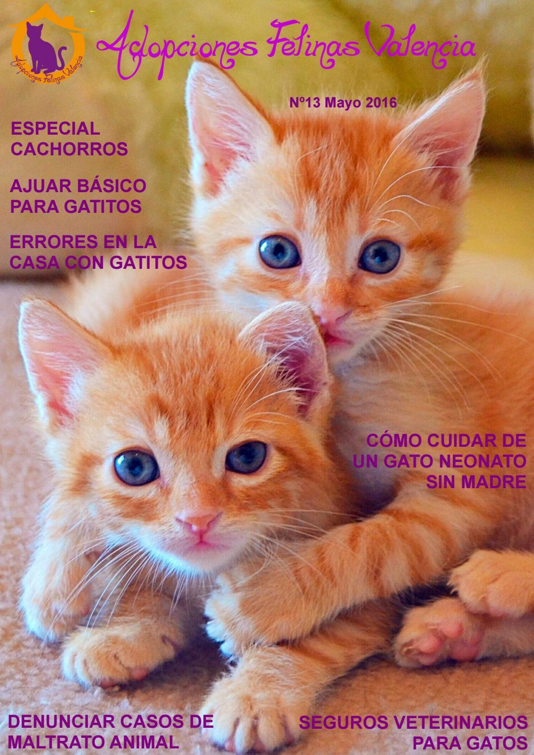 Adopciones Felinas Valencia Nº13 Mayo 2016 By Adopciones Felinas Valencia Issuu