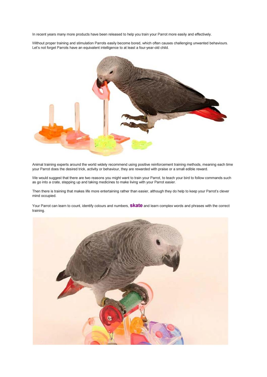 Training Parrots by Northern Parrots - issuu