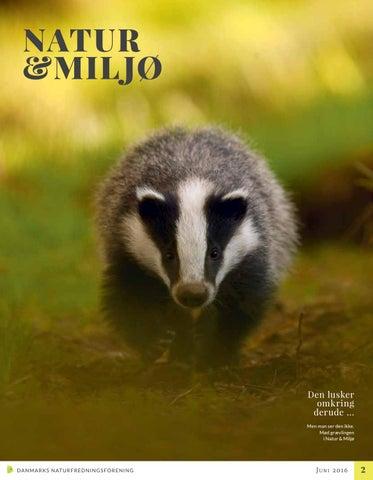 0c6173ac2ae Natur & Miljø nr. 2 juni 2016 by Danmarks Naturfredningsforening - issuu