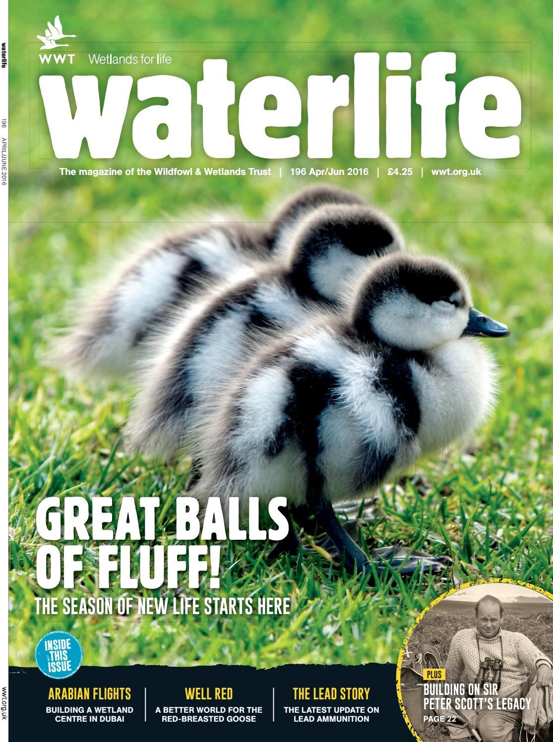 Waterlife Apr - Jun 2016 by WWT Waterlife - issuu