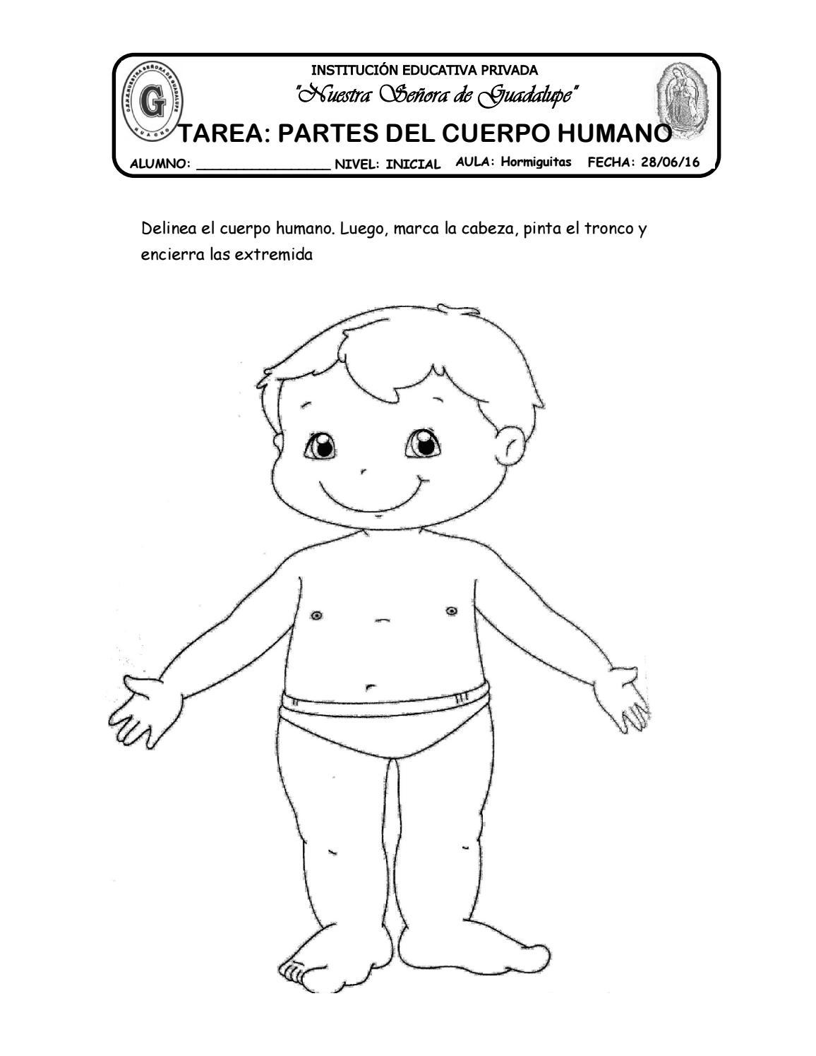 35 tarea partes del cuerpo humano by katy-hormiguita - issuu