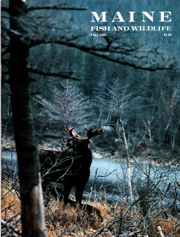 Maine fish and wildlife magazine fall 1981 by maine state for Maine fish wildlife