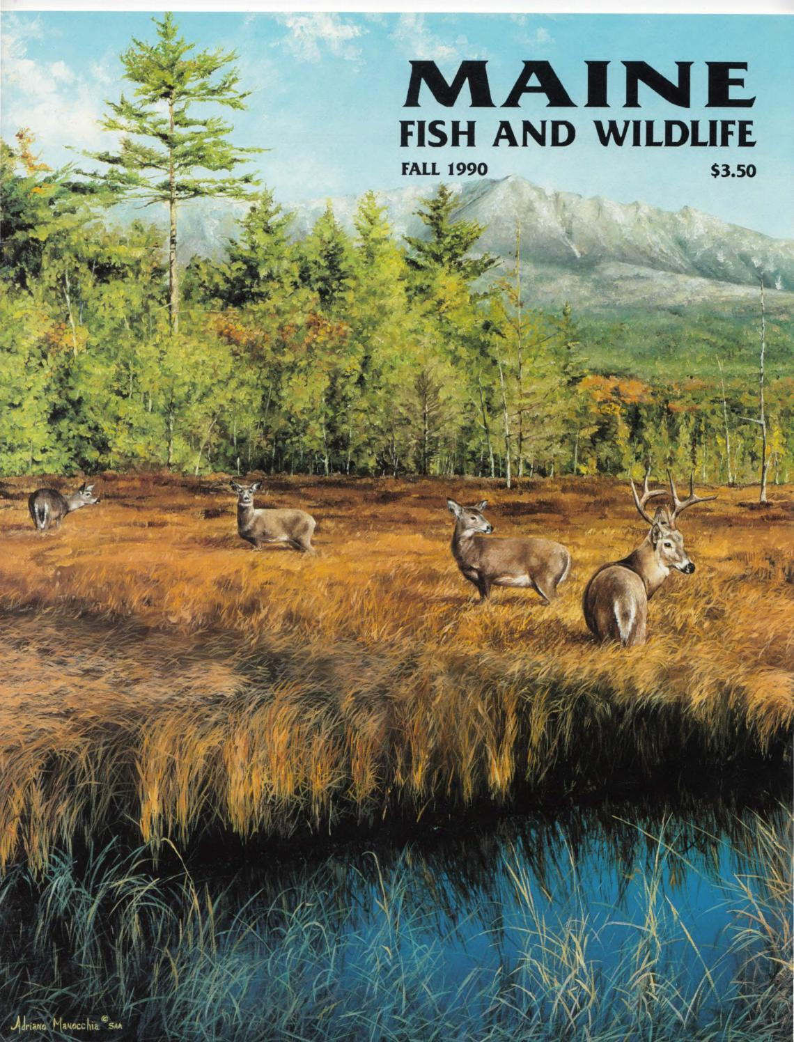 maine fish and wildlife magazine fall 1990 by maine state