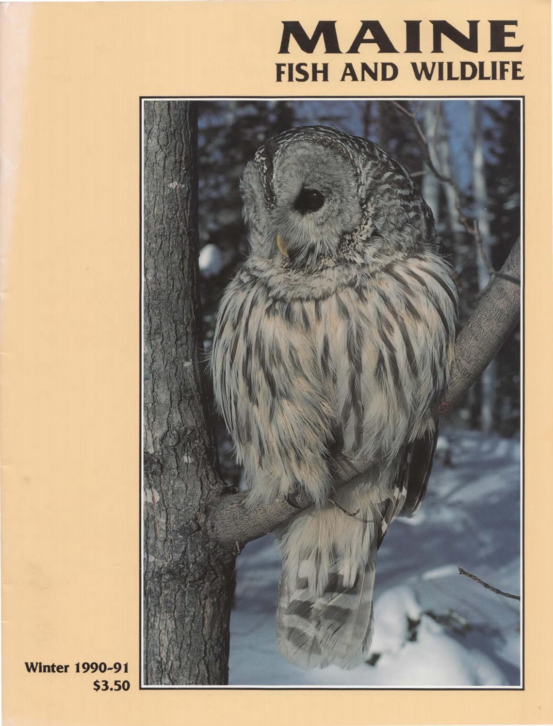 Maine fish and wildlife magazine winter 1990 91 by maine for Maine state fish