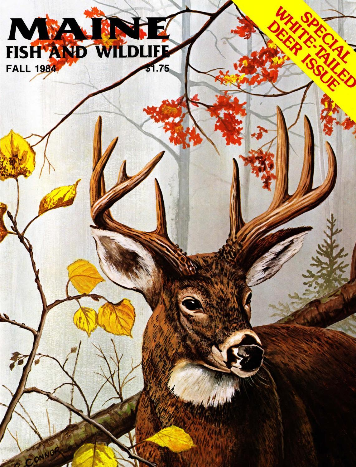 Maine fish and wildlife magazine fall 1984 by maine state for Maine fish wildlife