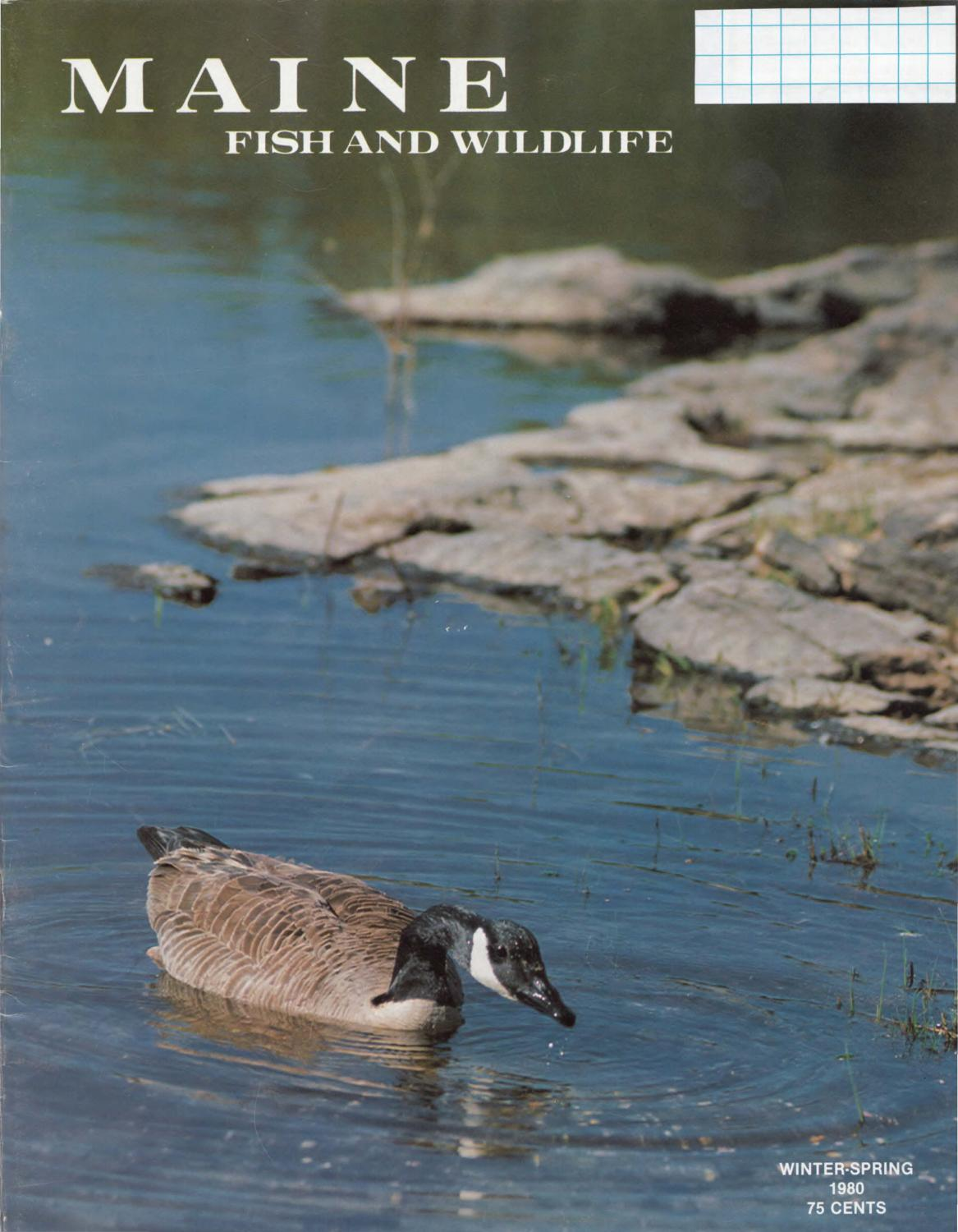 maine fish and wildlife magazine winter spring 1980 by