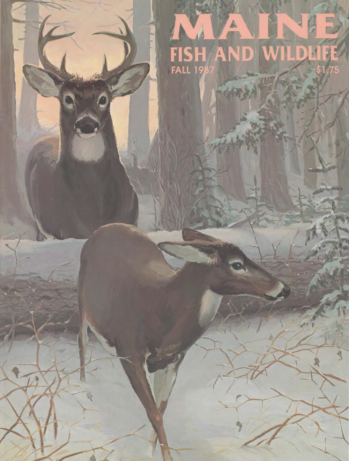 Maine fish and wildlife magazine fall 1987 by maine state for Maine state fish