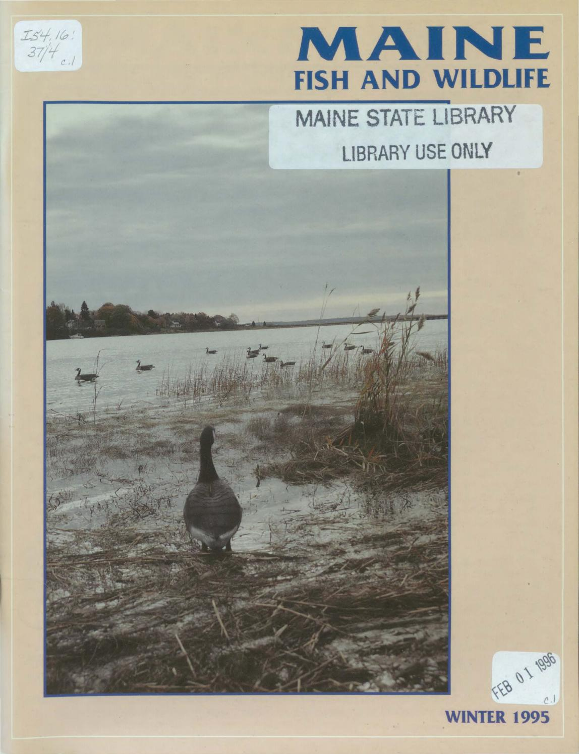 maine fish and wildlife magazine winter 1995 by maine