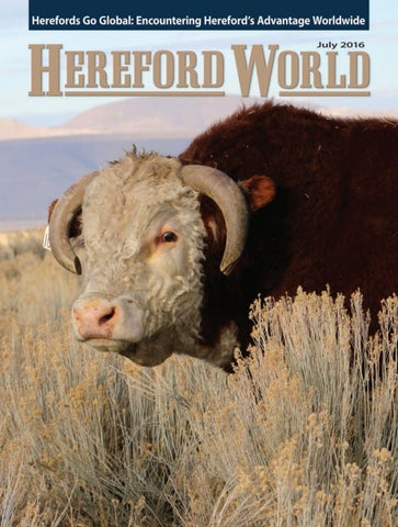 435a5972 American Hereford | July 2016 Archives - American Hereford