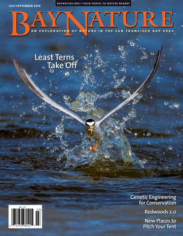 July September 2016 Bay Nature By Bay Nature Institute Issuu