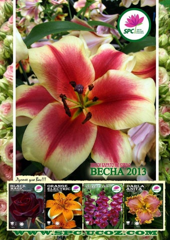 ЦВЕТЫ FLOWERS-IPM- 2013 by Expoconsulting - issuu 984fb210f56f3