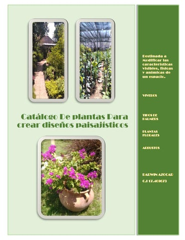 Catalogo de plantas digital darwin azocar by darwin jose for Plantas ornamentales croto