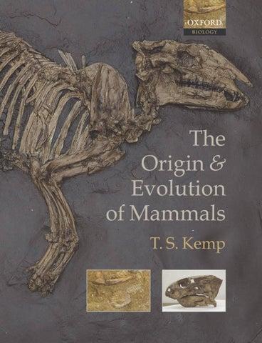 Permian Dimetrodon grandis fossil vertebra spine THIN SECTION pelycosaur