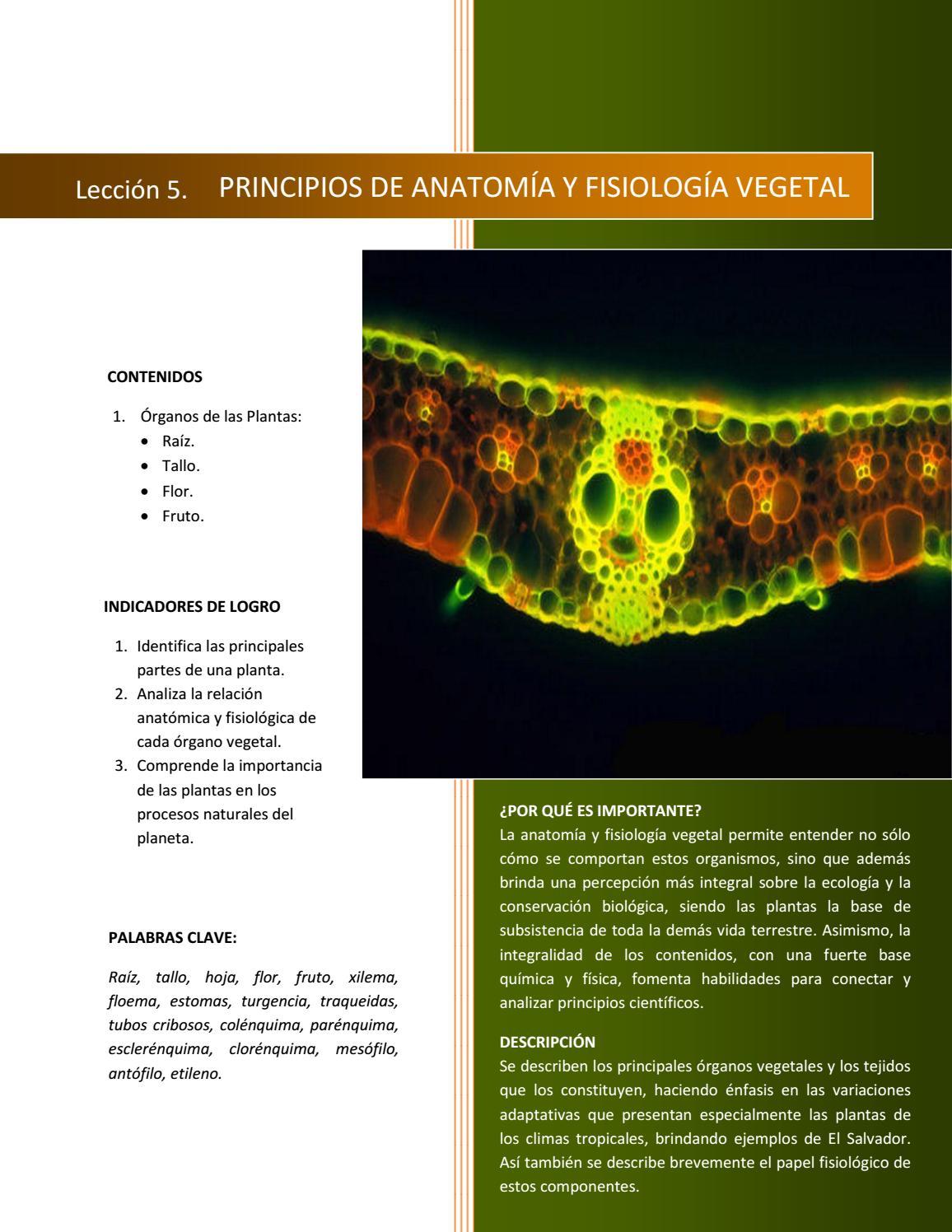 Septimo Grado Biología by Arnoldo Romero - issuu