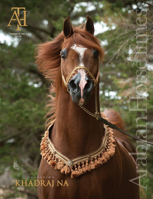 Arabian Horse Times Vol47 No2 Issue 7 By Krezi Kamis 32 Maybelline Super Bb Cushion Fresh Matte 03 Natural Issuu