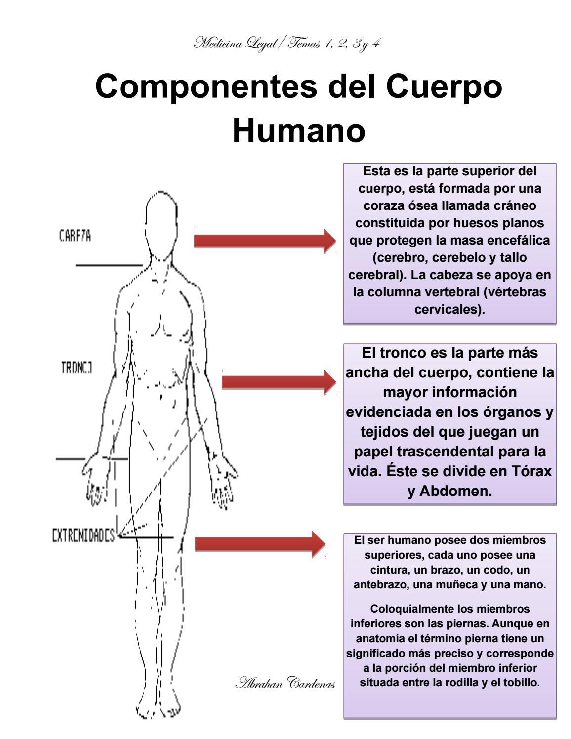 Vistoso Extremidades Inferiores Anatomía Foto - Imágenes de Anatomía ...