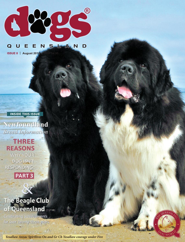 Newfoundland Landseer Named Set 6 Dog Photo Trade Cards