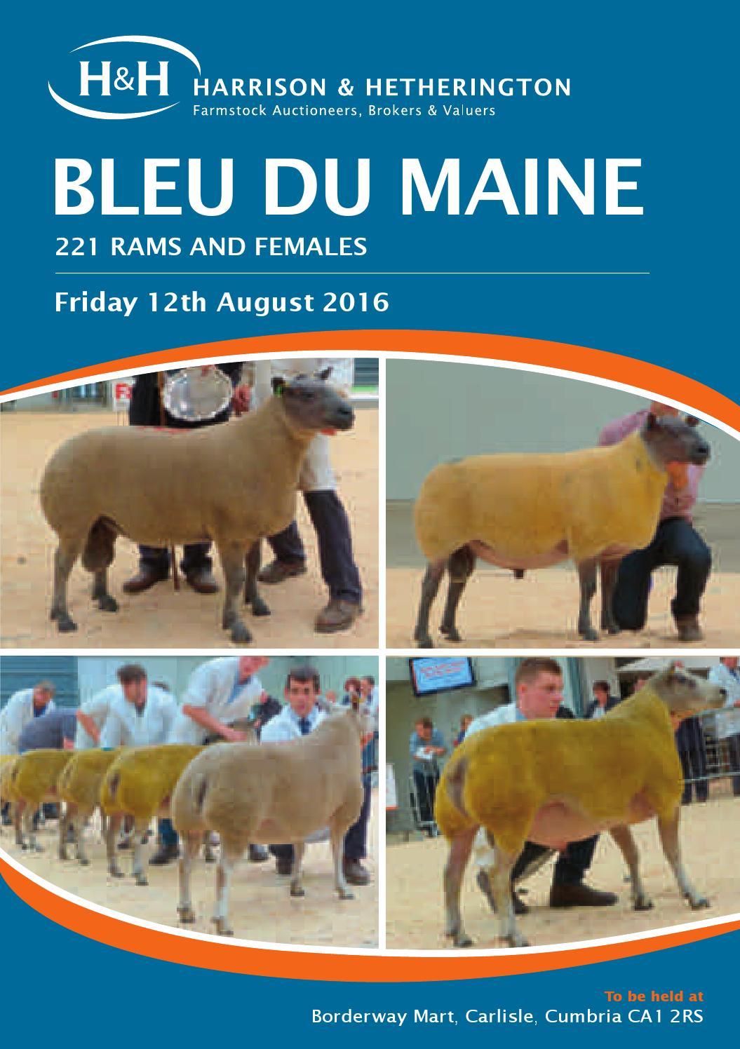 Bleu du Maine Sheep Show & Sale 120816 by Harrison & Hetherington ...