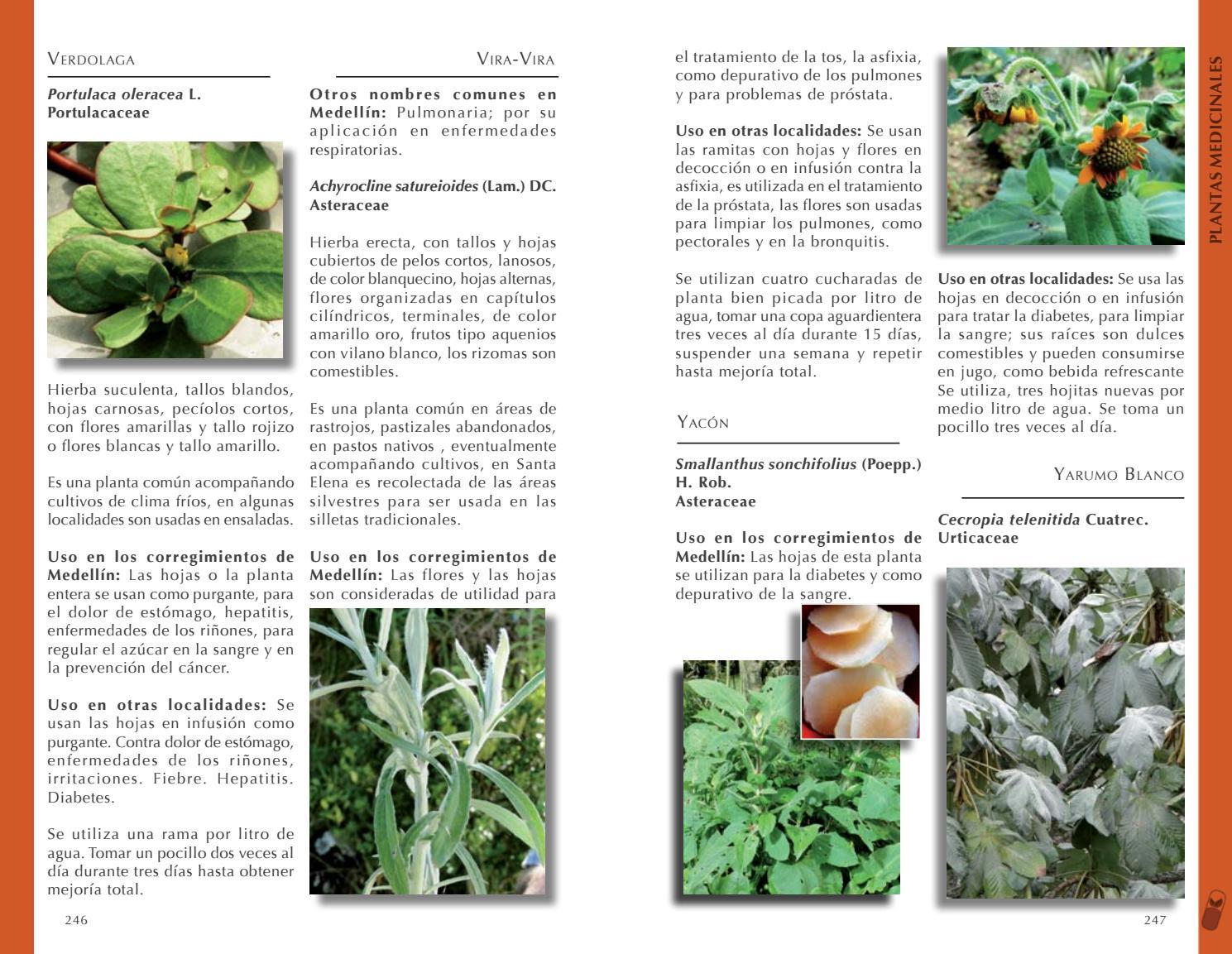 tratamiento de la diabetes smallanthus sonchifolius