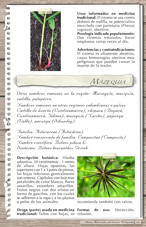 Plantas Usadas Como Medicinales En El Altiplano Del Oriente