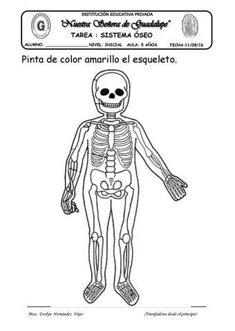 Tarea esqueleto by evelynabejitas - issuu